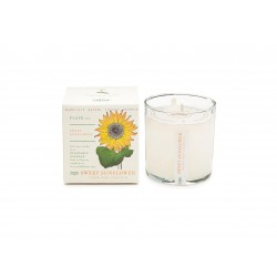 Kerze Sweet Sunflower (60 Stunden) by Kobo